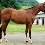 1393836704_1358187774_karabakh-horse-today