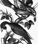 130px-Birds_Navvab